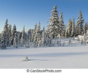 冬天, 阿爾卑斯山, 草地