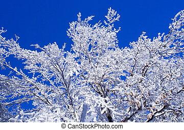 冬天, 霜, 樹