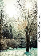 冬季, 公园, 在中, poland.