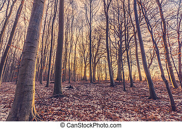 冬季, 森林, 日の出