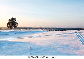 冬, そして, 木, 中に, 雪