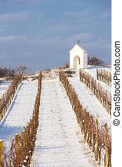 冬, ブドウ園, 近くに, hnanice, 南, moravia, チェコ共和国