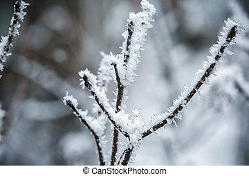 冬, ブランチ, の, 木, 中に, hoarfrost