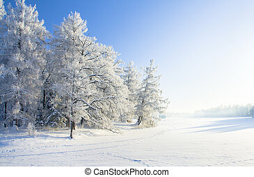 冬, 公園, 中に, 雪