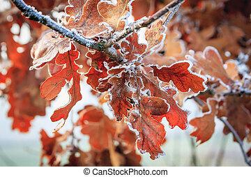 冬, 背景, hoarfrost, 上に, 葉