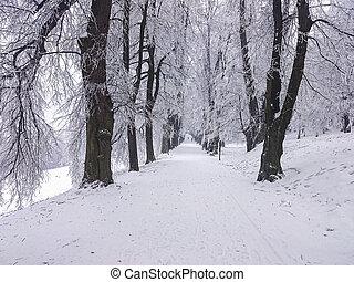 冬, 道, 森林