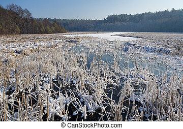冻结, 冬季, 芦苇, 湖