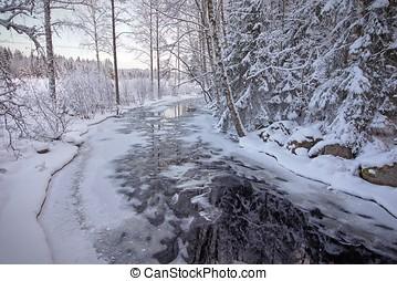 冻结, 流注, 在中, 森林