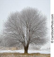 凍らせられた, 木, 中に, 冬, フィールド