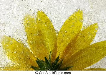 凍らせられた, 花, 黄色