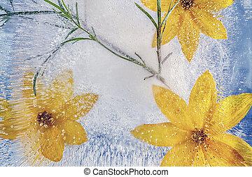 凍らせられた, 花, ice., 黄色, 構成