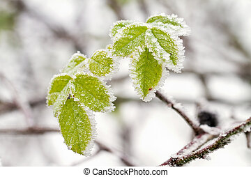 凍りつくほどである, 冬, 葉