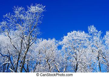 凍りつくほどである, 空気