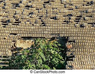 出現する, 木, 倒れること, 屋根