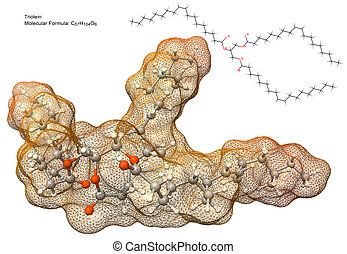分子, triglyceride