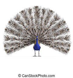 切り抜き, 上に, レンダリング, peacock., 素晴らしい, 道, 影, マレ, 白, 3d
