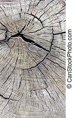 切り株, スペース, 上, 木, 古い, コピー, 光景