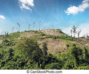 切口, 丘, 自然, 木, 山林伐採, 背景
