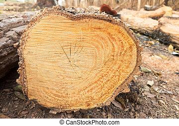 切口, 木