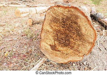 切口, 木, 中に, 森林