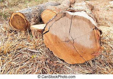 切口, 森林, 木