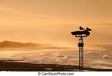 列, 日落, 海鸥, 二