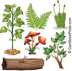 別, タイプ, の, 植物