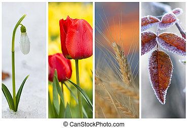 別, 季節, の, 年, -, いくつか, 写真, の, 美しい, nature., ライフサイクル, 概念