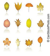 別, 種類, の, 木の 葉, アイコン