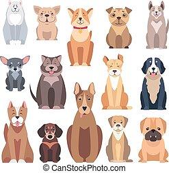 別, 種類, 犬, 背景, 白, 品種