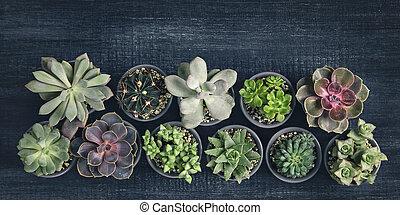 別, succulents