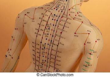 刺鍼術, モデル, 背中