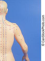 刺鍼術, 医学, モデル, 人間