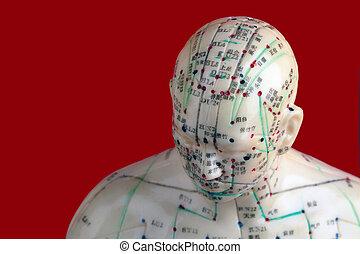 刺鍼術, 頭, モデル