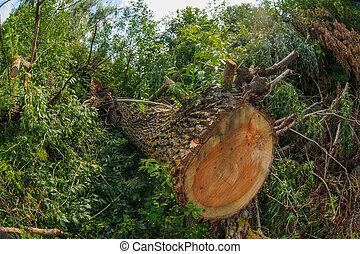 削減される, ∥, 木, 中に, 森林, 風景, 自然, 背景, ∥ために∥