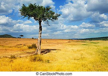 前景, アカシアの木, 風景, アフリカ