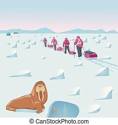 前景, 北極である, セイウチ, 遠征隊