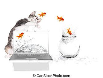 前足でたたくこと, 飛行, キティ, 水, 金魚, から