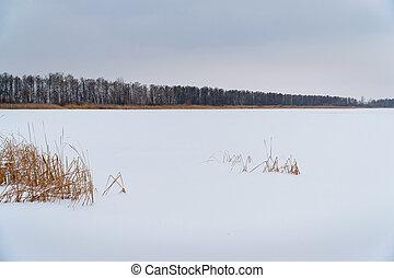 前部, 湖, フィールド, 大きい, ∥あるいは∥, 森林, 雪, 冬, 下に, 景色。