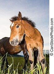 前部, 雄の子馬, ∥そ∥, 母
