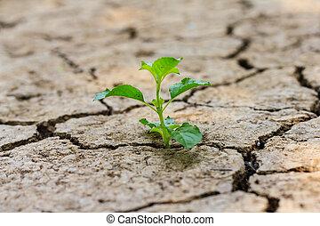 割れた, 木, 成長する, によって, 土壌, 乾きなさい, 緑