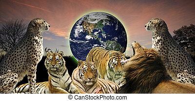 創造性, 概念, 圖像, ......的, 動物, 野生動物, 保護, the, 行星地球, 如, 它,...