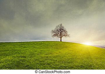 劇的な 空, そして, sunsrise, 上に, 古い, 孤独, 木