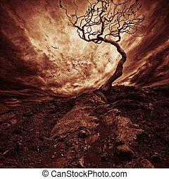 劇的な 空, 上に, 古い, 孤独, 木