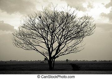 劇的な 空, 上に, 孤独, 死んだ, 木。, 芸術, nature.