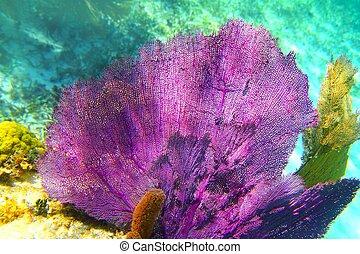 加勒比海, 鮮艷, 里維埃拉, 珊瑚, mayan, 礁石