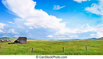 加拿大, 夏天, 風景, 艾伯塔
