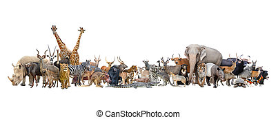 动物, 在中, 世界