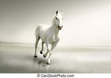 動き, 馬, 美しい, 白