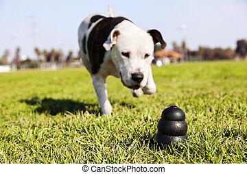 動くこと, へ, 犬, おもちゃ, 上に, 公園, 草